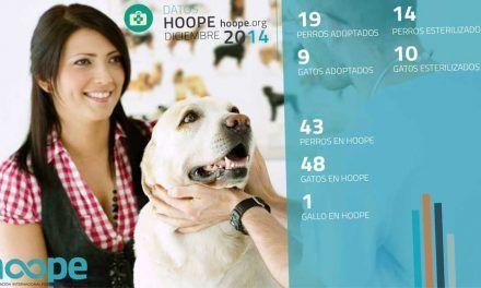 Entrevista a Hoope: Asociación de protección animal